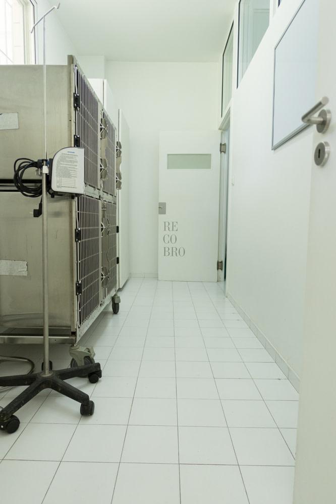 Clínica Veterinária Quinta da Capela